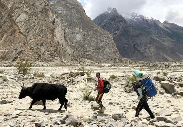 Porters and a Zoa (cross between a cow and a yak) heading up to basecamp